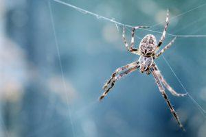 Spider - Aranha