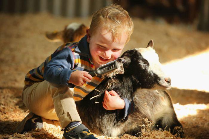 farm animals - animais da fazenda em inglês
